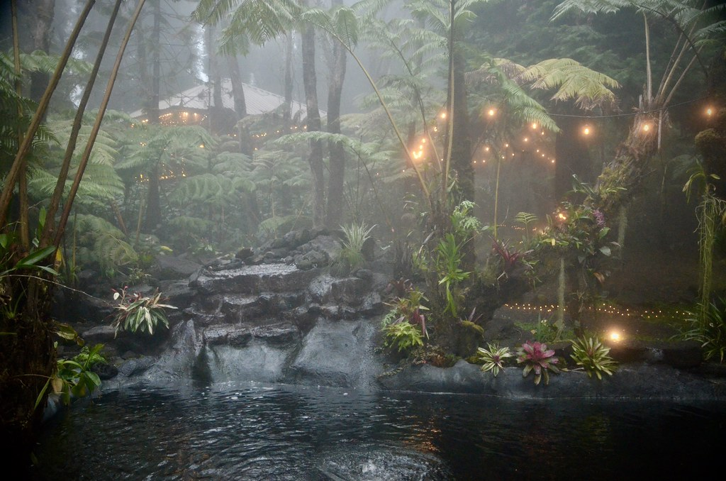 mystical rainforest mist