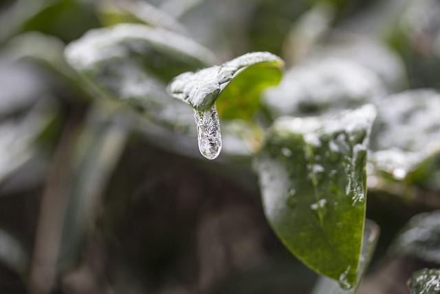 Ice storm_3