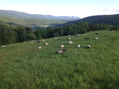 The views at Knoll Farm | by adkfarmerdan