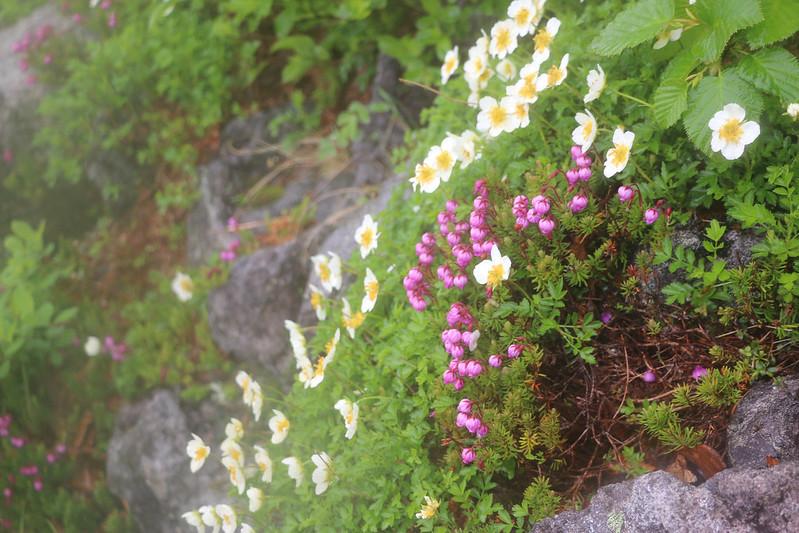 2014-07-21_01846_北海道登山旅行.jpg