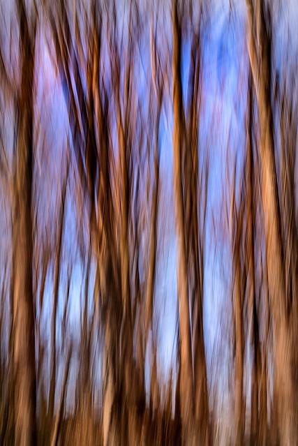Winter Trees Swipe 3-0 F LR 1-27-18 J349