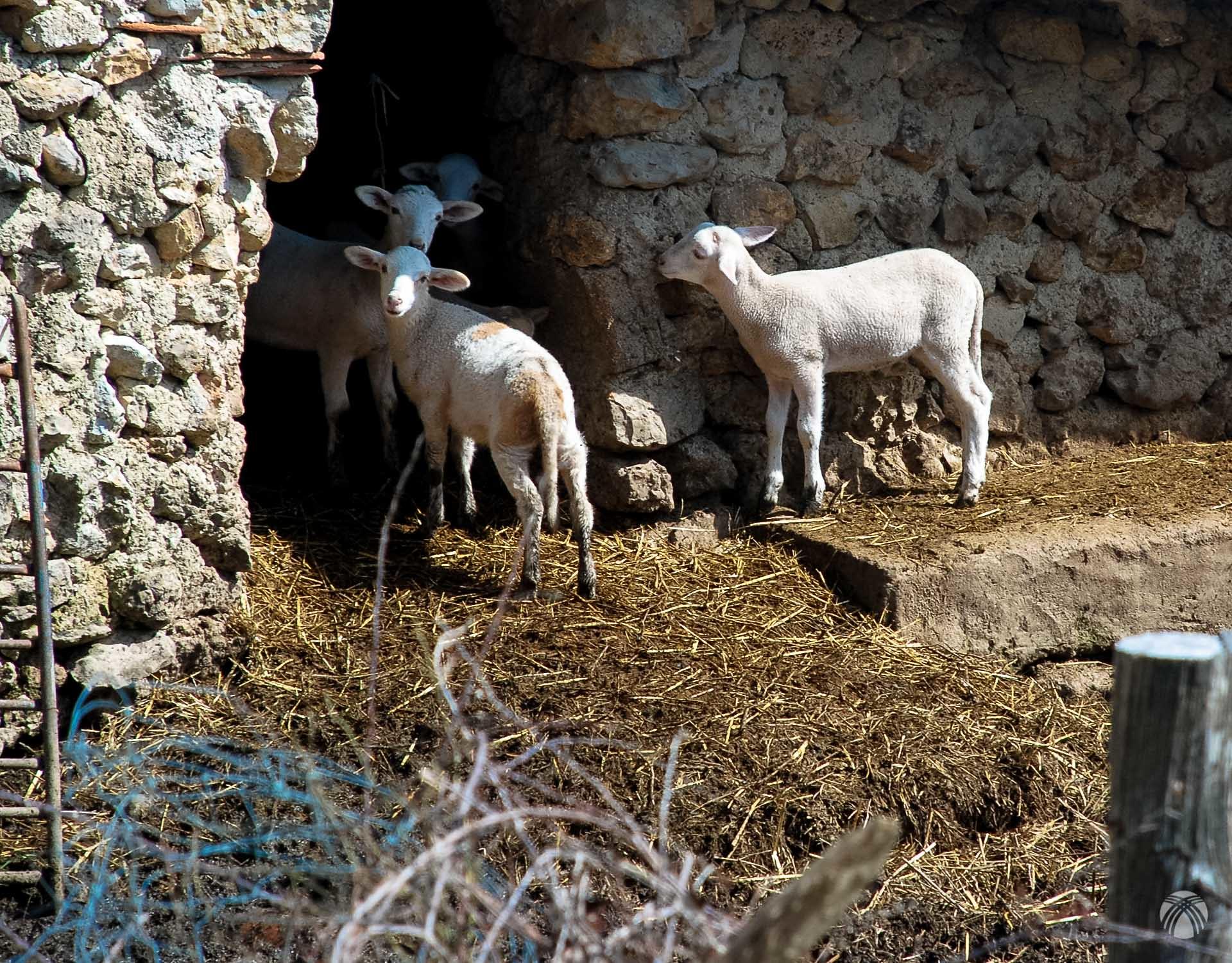 Vida nueva en Prado Maguillo