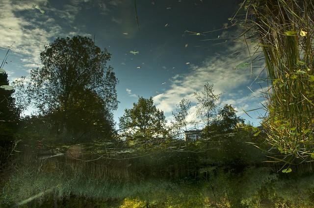 Surreal Pond Dream