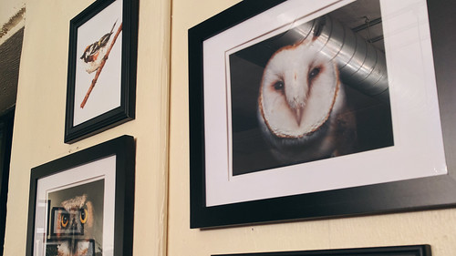 Creatures & Coffee | by Davidjwilson