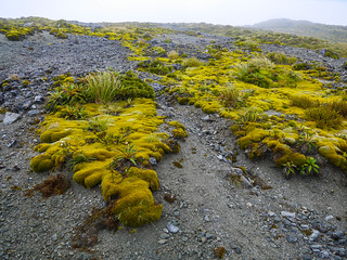 Kepler Track is full of surreal plants   by snackronym
