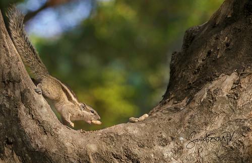 wildlife winter bangladesh outdoor canon 70d flickrheroes flickrfriday flickrestrellas lights green tree telephoto