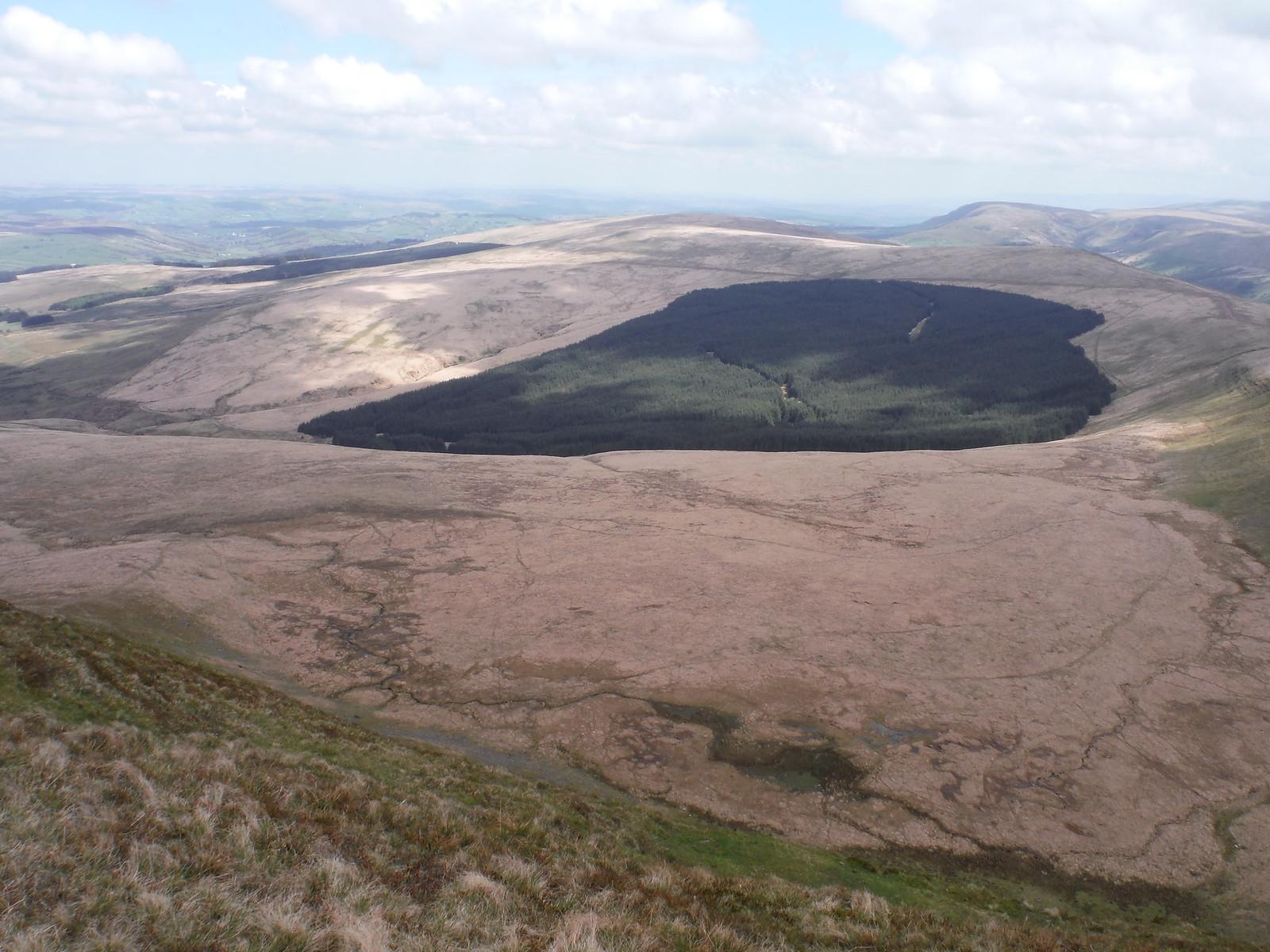 Forest in Bowl below Fan Gyhirych SWC Walk 307 - Fforest Fawr Traverse (Craig y Nos to Llwyn-y-celyn)
