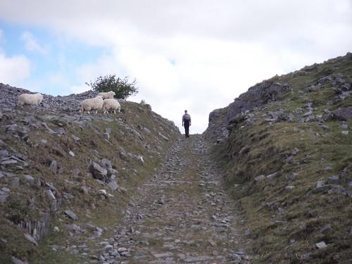 Walker on Dismantled Tramway through Gash in Limestone Wall SWC Walk 307 - Fforest Fawr Traverse (Craig y Nos to Llwyn-y-celyn)