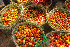 Tomato Value Chain
