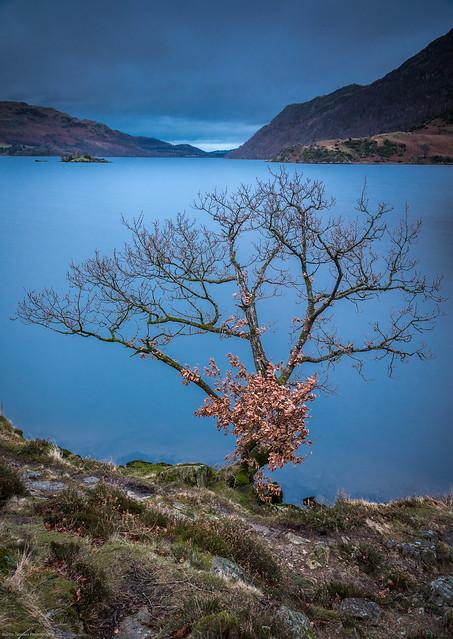 Ullswater Tree