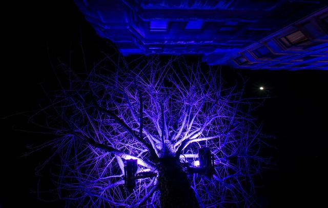 Blue tree crown.