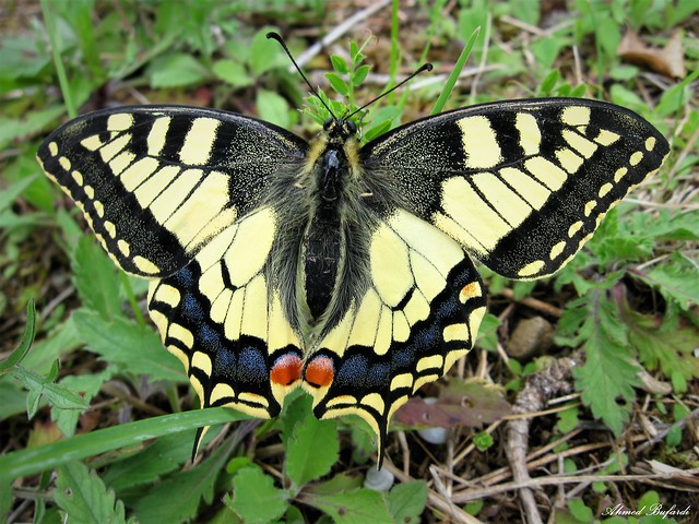 Butterfly 1564