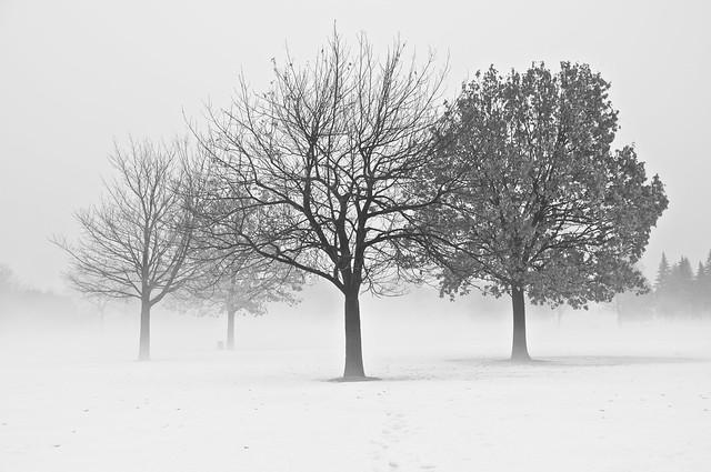 Brume/Mist [In Explore !]
