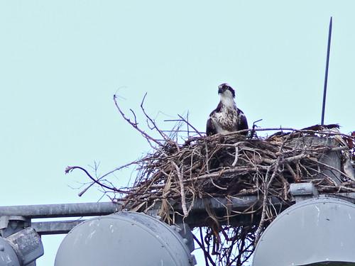 Osprey nest 02-20180225