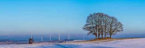 five trees landscape panorama raitschin upper franconia germany winter snow morning wind turbines blue sky
