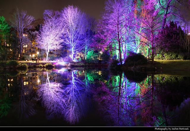 Enchanted Forest Reflection, Winterlichter, Palmengarten, Frankfurt, Germany