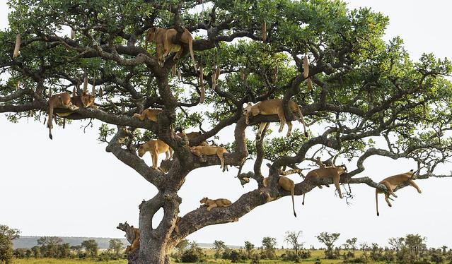 Underneath The Lion Tree