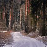 Forest pathways # 1