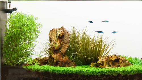 high light with CO2 planted spec v aquarium