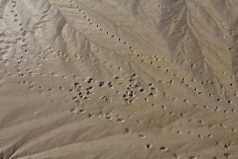 Avon footprints