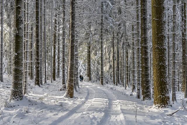 *The winter walk*