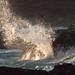 Dawn, Burgess Beach (14) by ozzie_traveller