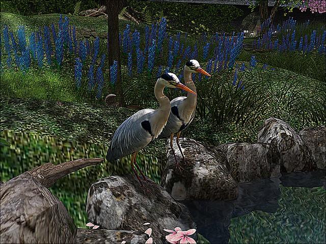 Foxcity - Twin Herons On Rocks