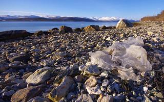 Marine litter. Plastic wrapping, already weakened by sunlight.