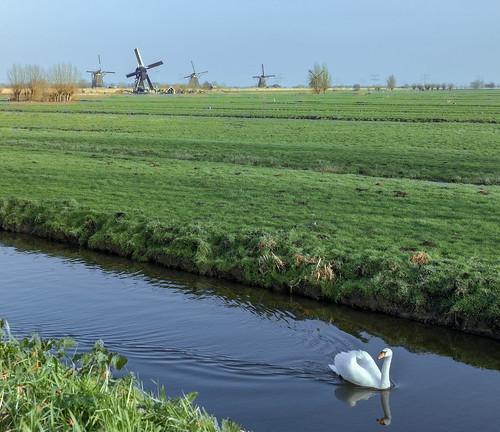 dutchlandscape canal grass polder swan windmills square nederlandvandaag kinderdijk