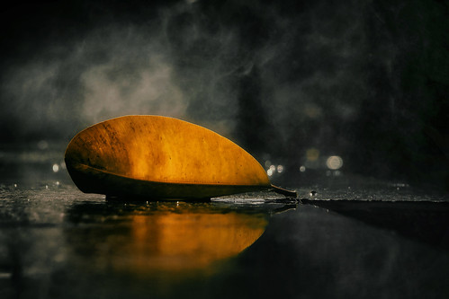 leaf edge yellow gold golden mist misty backlight reflection blackgranite fountain bokeh stilllife streetshooting bangkokthailand chinatown southeastasia siam thai symmetry patterns mood moody minimal minimalism shine shiny mystical steam steamy sultry edgy curve curvy shadow lhong1919 foliage nature fallen detail veins nikond5100 tamron18270 photoshopbyfehlfarben thanksbinexo