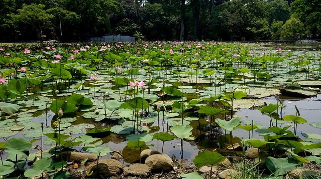 INDONESIEN, Im botanischen Garten von Bogor, 17089/9568