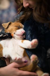 Deya with a Puppy | by nan palmero
