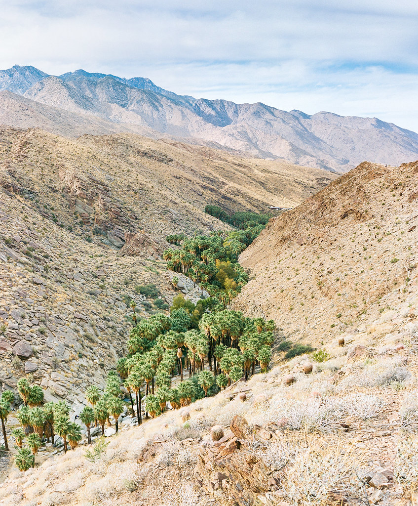 Palm Springs-Palm Canyon Ektar Film X4 Panorama