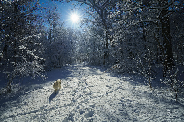 A Winter's Walk in the Woods
