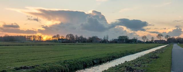 Swan country III