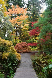 Fall in the Woodland Garden, Washington Park Arboretum.