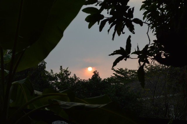 the sun going down between roofs, mango leaves and banana leaves