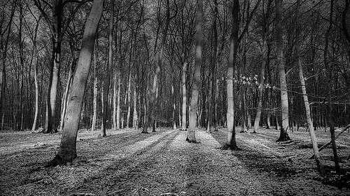 forest winter light sunlight silence moments trees landscape nature quietness lightandshadows blackandwhite monochrome contrast outdoor woods nrw