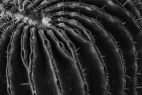 Cactus by Chris Handley