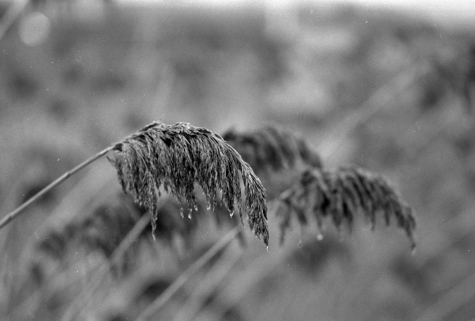 CCR:FRB - Review 05 - Ilford FP4+ - Roll 04 (TMax Developer)