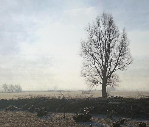 morning ice ochtend ijzig vorst polder vockestaertpolder kelskphotography delft delfland zuidholland holland nederland netherlands textuur texture