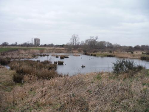 Pond by Wantz Stream, Beam Parklands SWC Short Walk 33 - Dagenham Parks, Rivers and Ponds