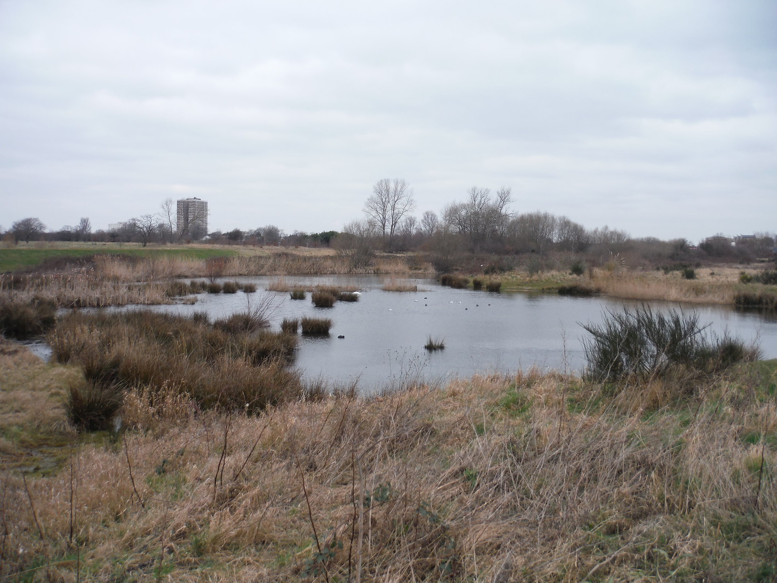 Pond by Wantz Stream, Beam Parklands SWC Short Walk 33 - Dagenham Parks, Rivers and Ponds