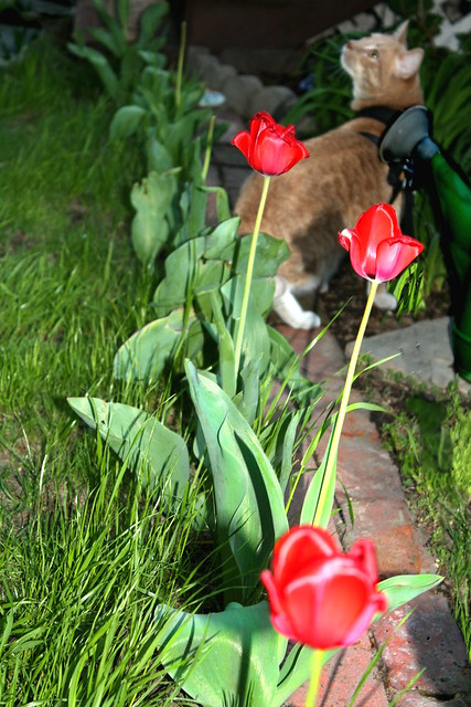 Ly, Stop and Smell the Roses . . . Well, the Tulips!
