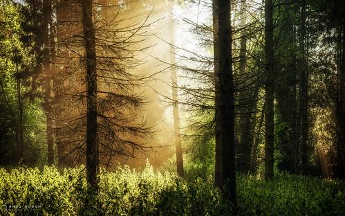 wood trees england sunlight green woodland unitedkingdom outdoor sony gb sunrays crepuscular southoxfordshire littlewittenham a99 sonyalpha andyhough slta99v littlewittenhamwood andyhoughphotography