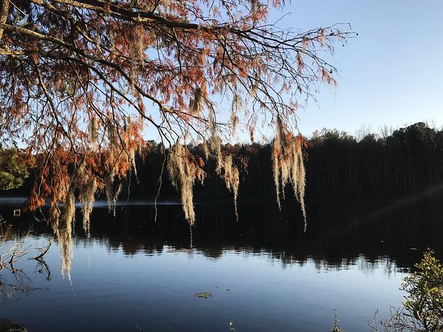 Scenic Magnolia Gardens