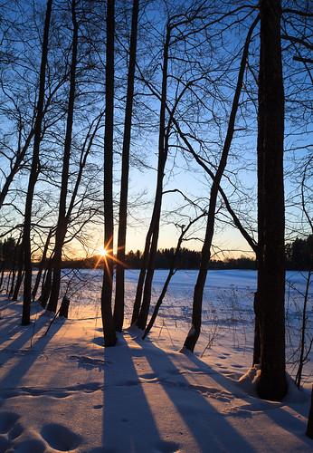24mmts puu landscape pitkäjärvi auringonlasku jää talvi silhouette outdoor nature espoo suomi laaksolahti 24mm aurinko finland ice järvi lake lens prime scandinavia sun sundown sunset tiltshift tree winter uusimaa fi