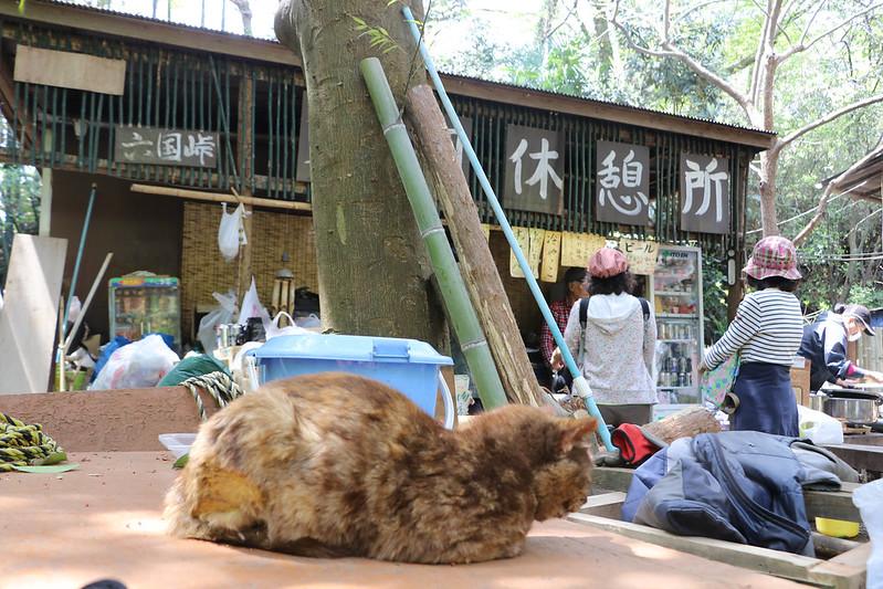 天園休憩所の猫