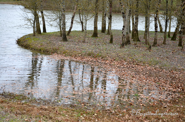 L'hiver dans l'étang