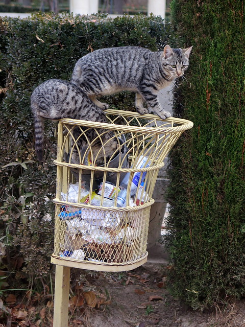 Aranjuez, hungry cats in the garden island...